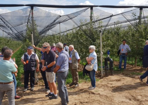 Fruit producers from Italy visited our orchard