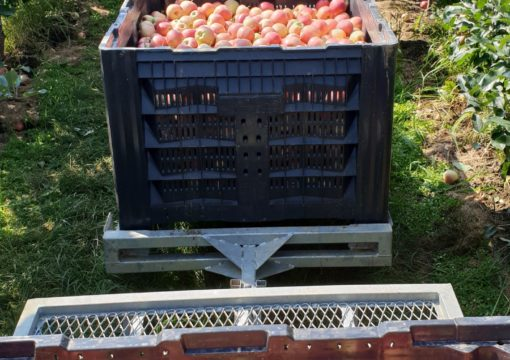 Picking of apple Gala is finished